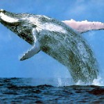 whale 150x150 Life Coaching Tip: Are You a Slave to Memory?