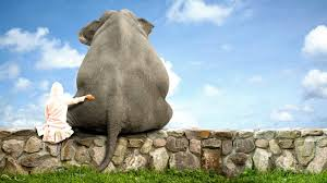 elephant The Journey of a Meditator, Part 2