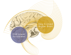 HigherBrain 300x233 Higher Brain, Lower Stress