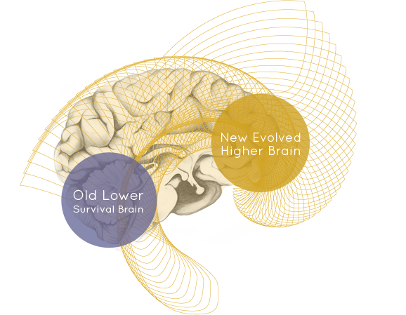 "What The Heck Is A ""Higher Brain""?"